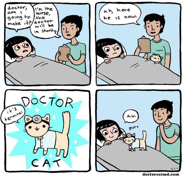 2011-01-10-doctor-cat